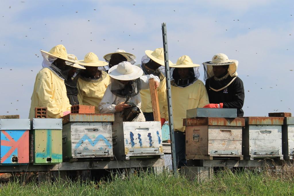 Bee my job - Apicoltori si diventa. Foto gentilmente concessa da APSCambalache